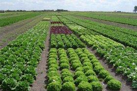 Informe sanitario sobre la situación de los agroquímicos de Entre Ríos