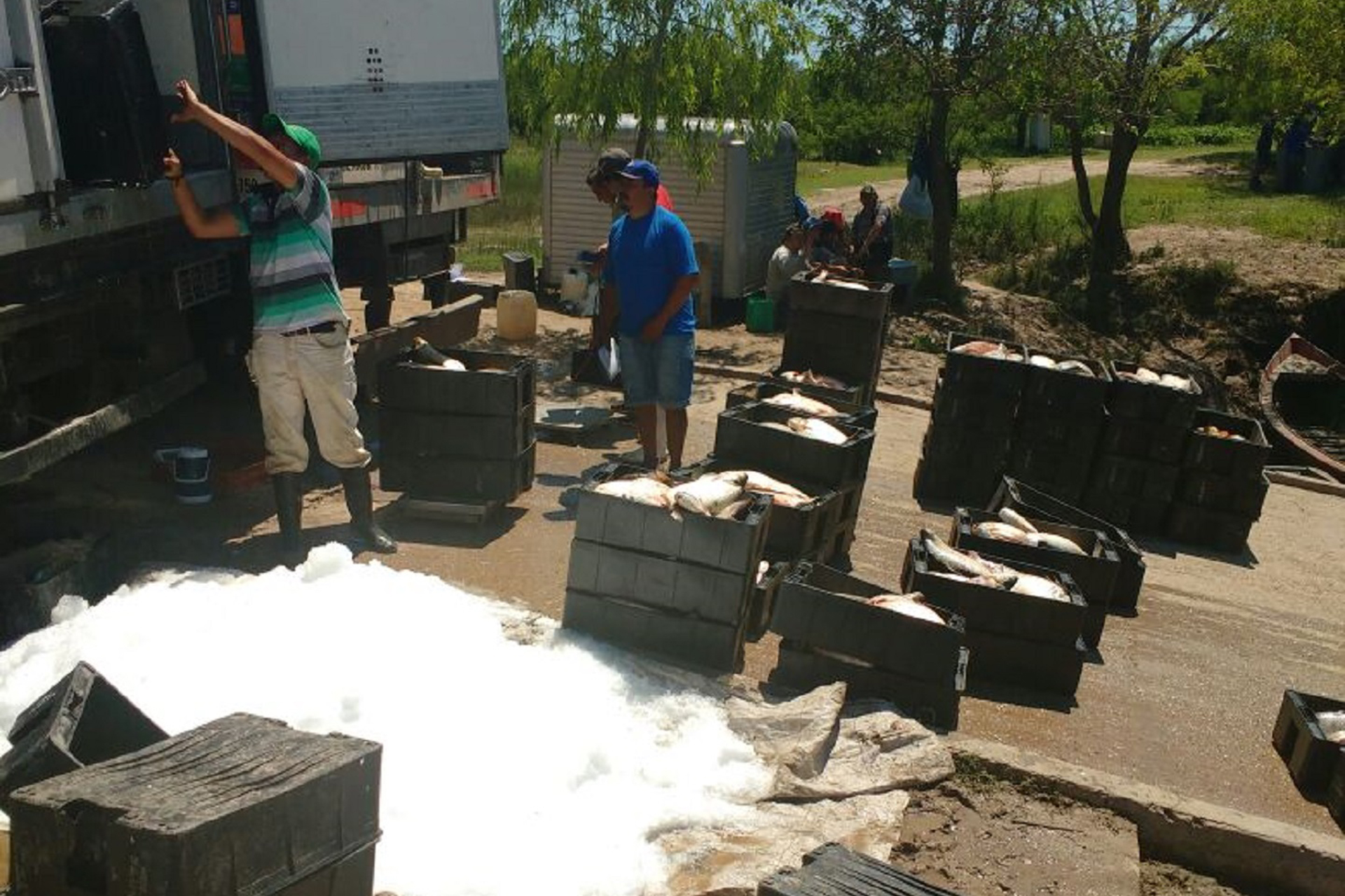 .Decomisan más de 9.000 kilogramos de pescados transportados ilegalmente.