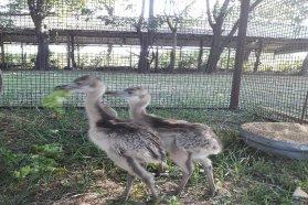 Se recuperaron animales de la fauna silvestre que eran transportados para su venta ilegal