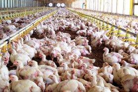 Notable incremento de granjas avícolas que obtuvieron los certificados ambientales para poder exportar