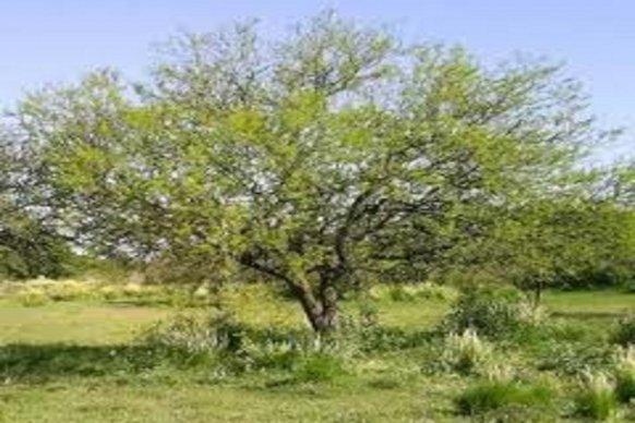 Impulsan la reforma y prórroga de la Ley de Inversiones para bosques cultivados