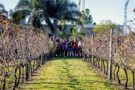 Producción vitivinícola en Entre Ríos: una industria en crecimiento