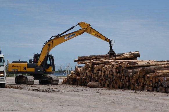 Comenzó a operar el Puerto de Ibicuy con el acopio de madera para exportar a China