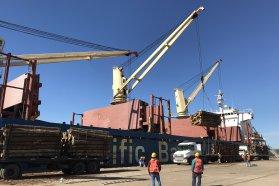 Desde Entre Ríos saldrá la primera exportación argentina de eucalipto a China