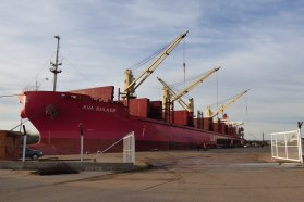 La exportación de eucalipto abre nuevas oportunidades a productores entrerrianos