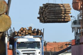 Desde el puerto de Ibicuy, Entre Ríos exporta por primera vez madera de pino y  eucaliptus a China