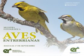 Hay una muestra fotográfica sobre aves entrerrianas en la Casa de Entre Ríos
