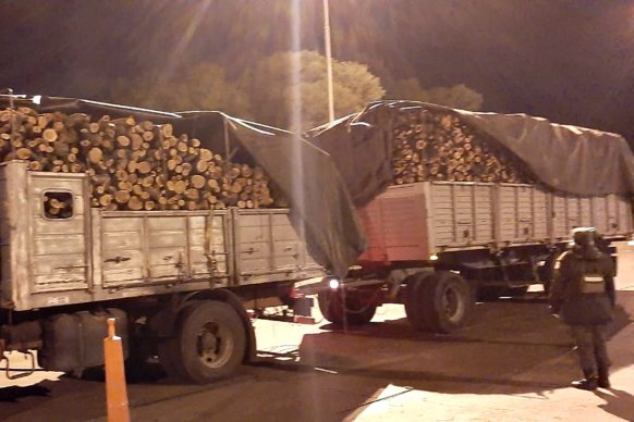Se decomisaron productos forestales que eran transportados de manera irregular