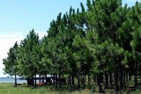 Entregan 13 millones de pesos a productores forestales para la plantación u otra labor