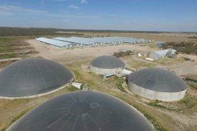 La Región Centro busca impulsar al sector porcino y potenciar sus exportaciones