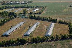 La avicultura crece y genera 22.000 empleos en la provincia