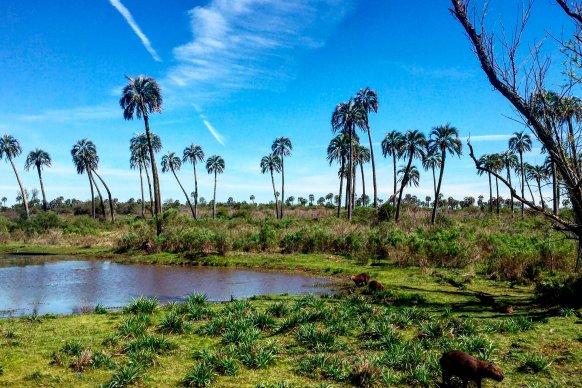 Ya están aprobados los protocolos para iniciar la temporada turística en Entre Ríos