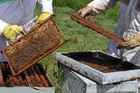 La apicultura entrerriana espera ingresos adicionales por la quita de retenciones a la exportación