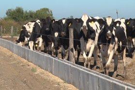 Lanzan créditos para el sector lácteo con tasa de interés bonificadas
