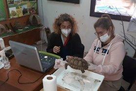 Concretan un plan de rehabilitación de tortugas en cautiverio
