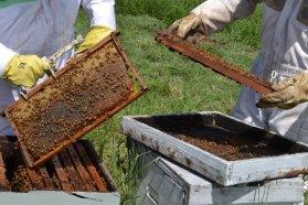 El crecimiento de la apicultura consolida a la provincia como segunda productora nacional