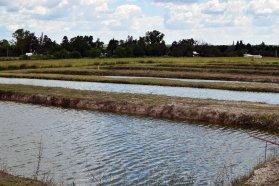 La provincia adhirió por ley al Régimen Nacional de promoción de la Acuicultura