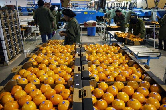 Citrus: La provincia gestiona mejoras para ampliar mercados internacionales