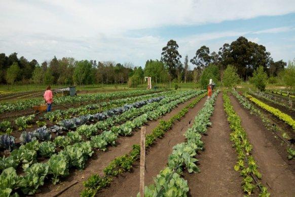 La provincia impulsa proyecto de desarrollo hortícola en Concordia