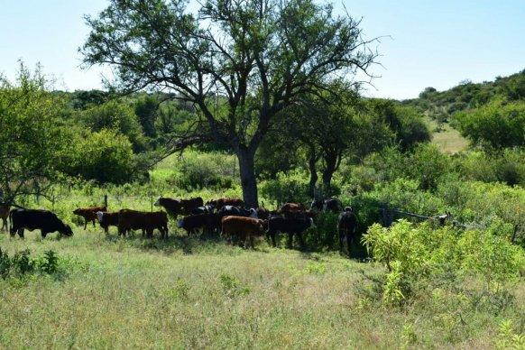 Capacitan a productores ganaderos sobre principios básicos para el manejo del monte